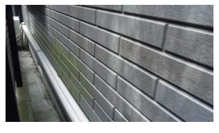 外壁塗装 カビやコケの付着